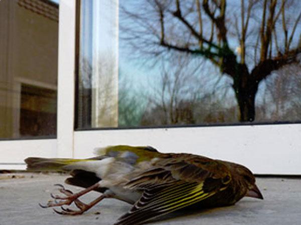 Le traitement de vitrage vitre teinté protège les oiseaux !